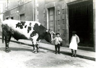 Le 1er bœuf gras