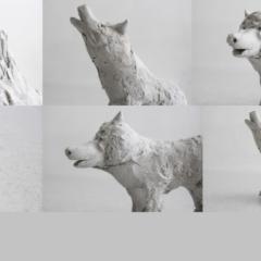 Loups du mois d'août